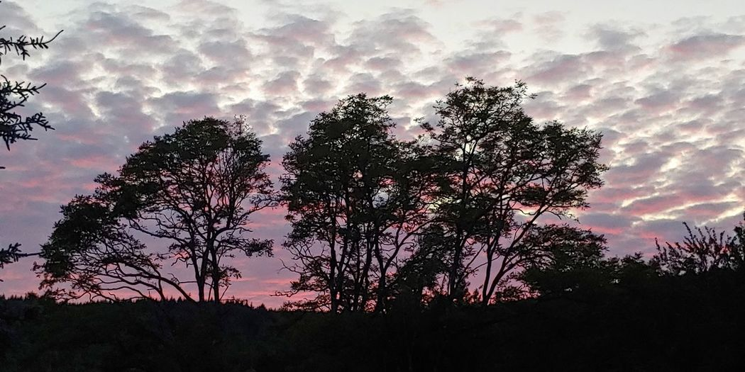 Tree Sunset