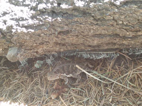 Horny Toad Canon City Gods Creation Wow!! Hornytoad Hiking Adventures Outdoors