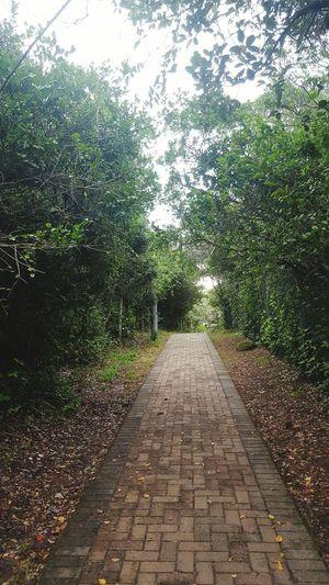 Wilderness Walks Unwinding Metime CalmingOutdoors