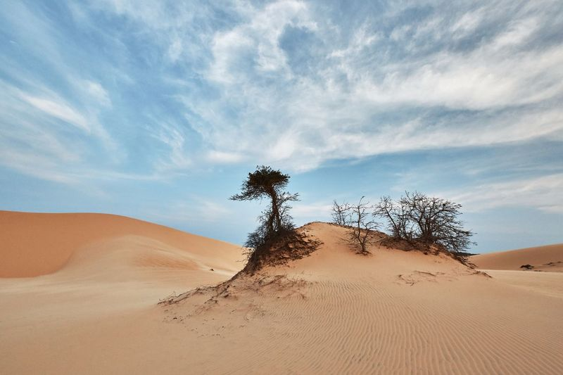 Sand Land Sky Plant Tree Nature Landscape Cloud - Sky Scenics - Nature Sand Dune Tranquility Tranquil Scene Day Non-urban Scene No People Outdoors Climate Environment Beauty In Nature Desert