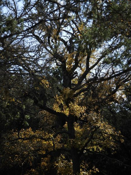Elm in creek bottom Tree Nature Growth Low Angle View Beauty In Nature Day Outdoors Forest Branch No People Scenics Tranquility Tree Trunk Sky