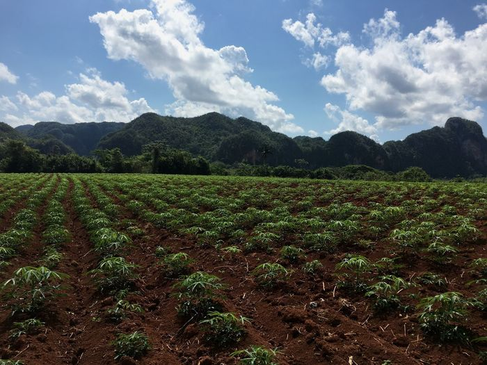 Scenic View Of Agricultural Field And Mountain Against Sky