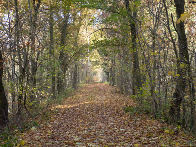 Backgrounds Copy Space Fall Beauty Fall Colors Fallen Leaves Foliage Forest Photography Path Pathway The Way Forward Tunnel