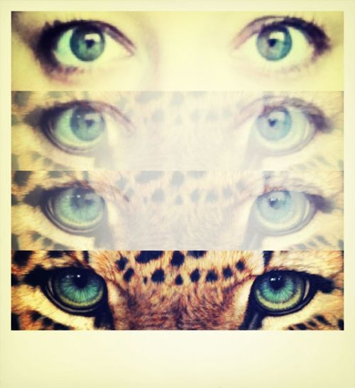 EyeTiger   I've got the eye tiger - Katyperry