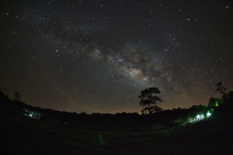 Astronomy Beauty In Nature Constellation Dark Galaxy Idyllic Infinity Milky Way Nature Night No People Outdoors Plant Scenics - Nature Sky Space Star Star - Space Star Field Tranquil Scene Tranquility Tree
