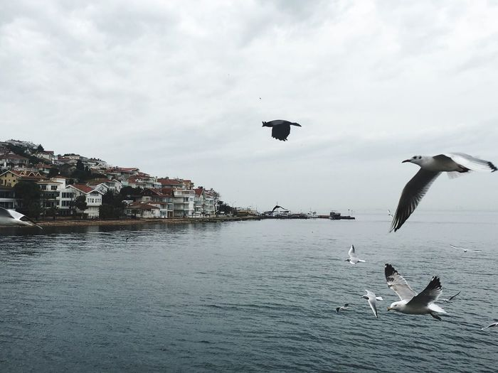 Birds Flying Over Sea Against Sky At Big Island