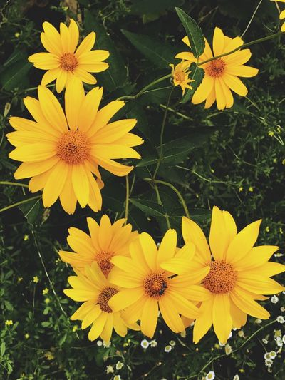 Flower Yellow Fragility Flower Head Growth Petal Nature Beauty In Nature Plant Freshness Outdoors Black-eyed Susan Day Close-up Blooming No People Nice Day Рязань Nature Spring Flowers