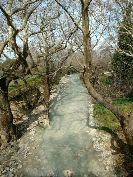 Tree Nature Outdoors Water Beauty In Nature Tranquility Growth No People Tranquil Scene Scenics River River Collection River View