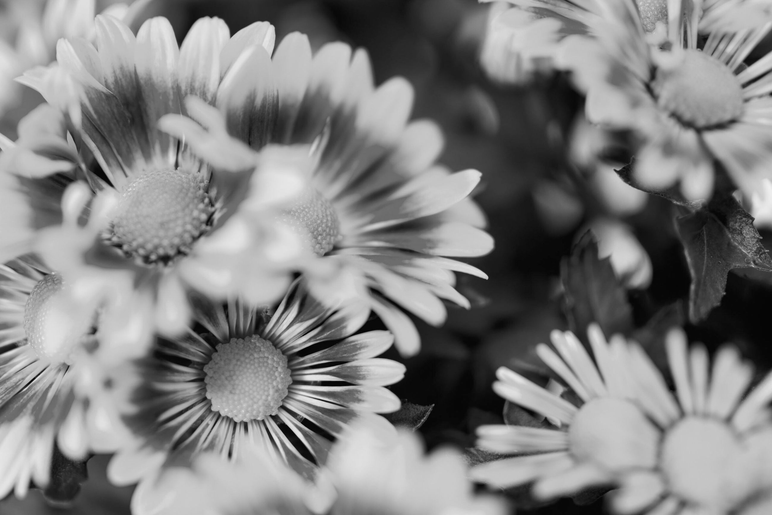 flower, fragility, growth, beauty in nature, nature, petal, freshness, flower head, plant, close-up, blooming, no people, day, outdoors
