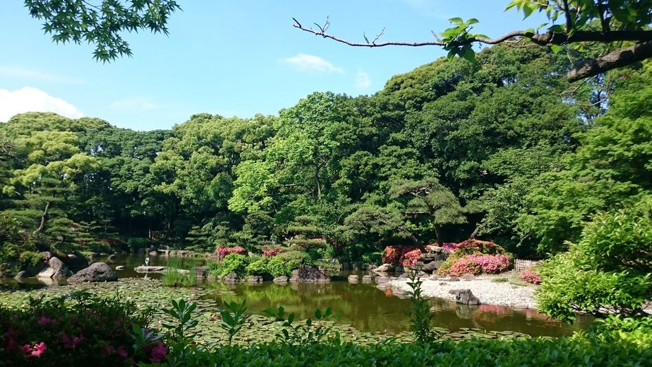 Beauty In Nature Day Flower Green Color Growth Japan Nature No People Outdoors People Plant Scenics Sky Tranquility Tree Water