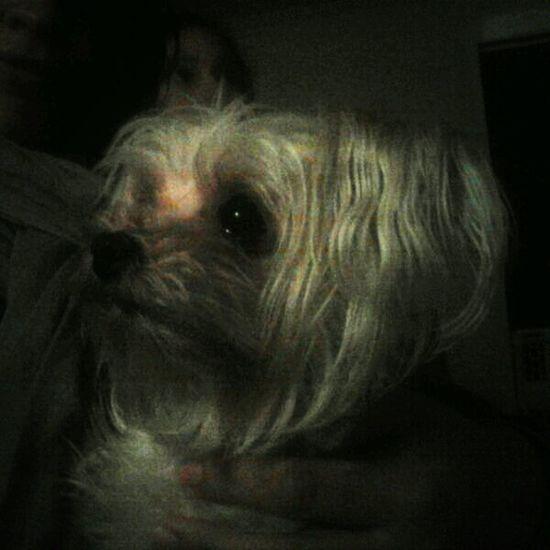 Puppy Justgoshot