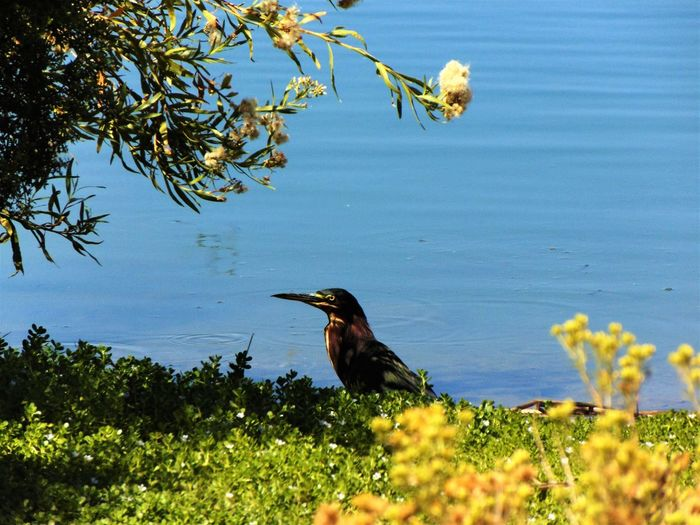 Bird lover Animal Themes Animals In The Wild Beak Beauty In Nature Bird Blue Branch Day Flower Lake Male Animal Nature No People Non-urban Scene One Animal Perching Scenics Side View Tranquil Scene Tranquility Tree Water Water Bird Wildlife Zoology