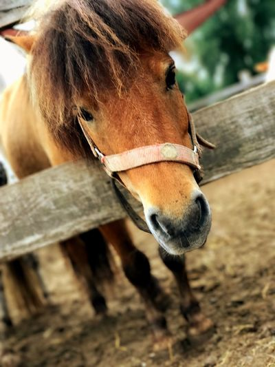 Horse Domestic Animals One Animal Animal Themes Mammal Livestock Day Outdoors Close-up No People