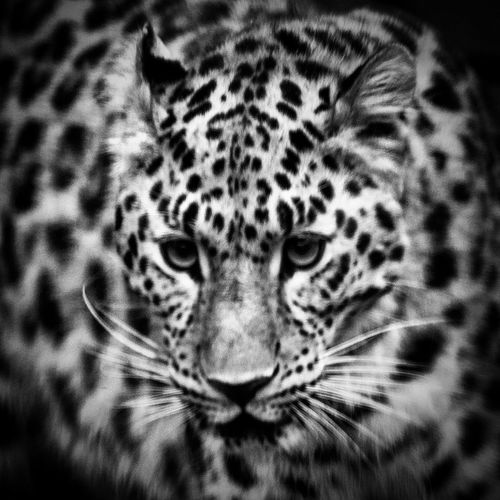 Zoophotography