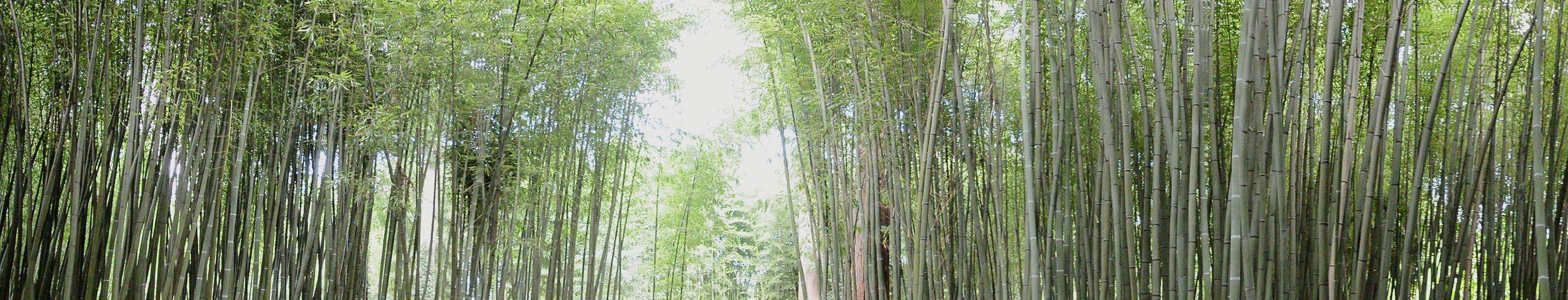 Petite vue panoramique autour d'une forêt de bambous Panoramic View Bamboo Forest La Bambouseraie Anduze Holiday Memories South France