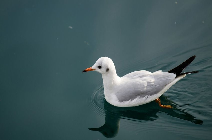 Taking Photos Water Reflections EyeEm Birds Birds