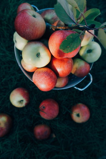 High angle view of apples in bucket on field