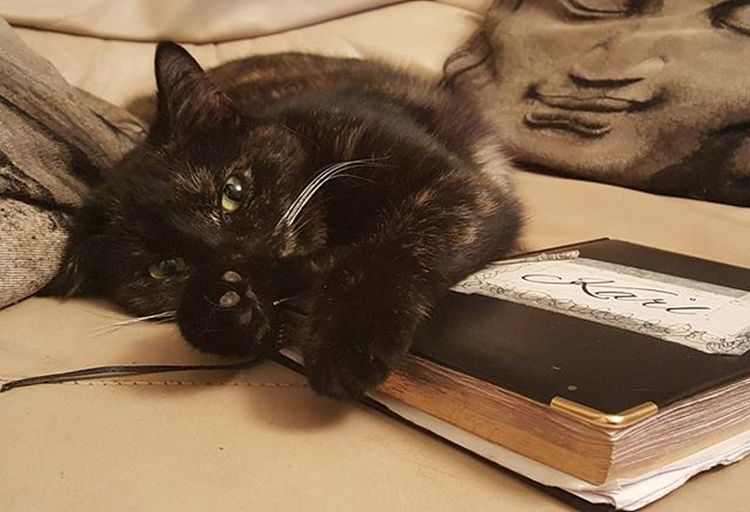 Someone is guarding the boss man's diary ... all slots are secured 😂 Whiteflame Inksocerer Karlstevens Beautiful Catdog OM Inhousesecurity Guardcat Tattoosit Secureyourslots Aintknowonegettingpasthemclaws Blackandgreyshade Inprogress Diary Catdiary Safewither Mylove