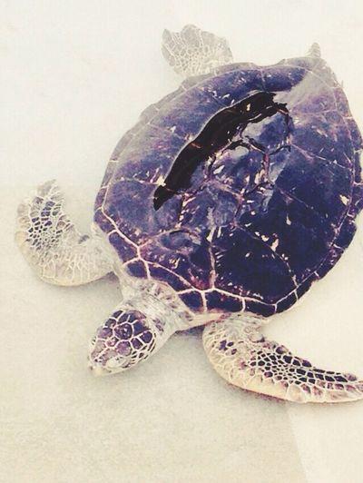カメ\(^o^)/ Aquarium Turtle Cute Japan 江の島 水族館