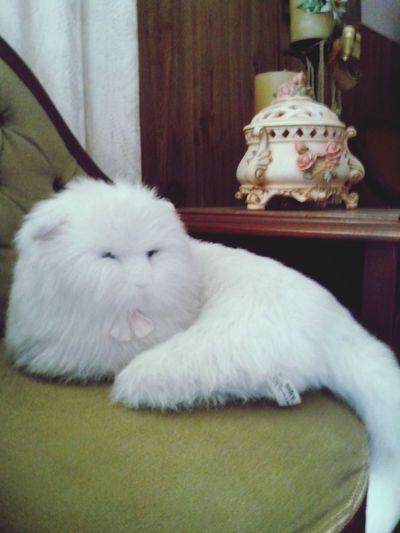 Cat *Petunia(:*