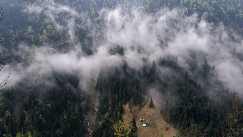Eyem Nature Lovers  Hiking First Eyeem Photo Switzerland Clouds Fog Ticino House Alpine Alps Fog Pinaceae Pine Tree Sky Landscape Idyllic