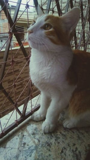 Pets One Animal Domestic Animals Animal Themes Mammal Dog Portrait Indoors  No People Day Sitting Close-up Cat
