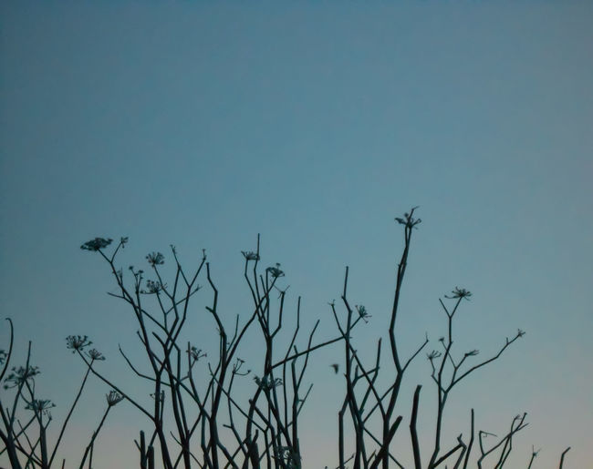 twilight frozen branches Frozen Plant Life Dry Plants Winter Frost Twilight Dawn Wildflowers Nature Subtle Blue Sky Landscape Plant Branch Cold Temperature Cold Season  Weather Condition