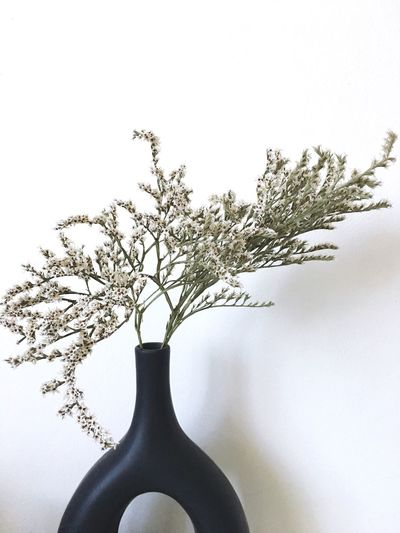 I wish for a quiet Saturday Plant Nature Tree Indoors  No People Growth Beauty In Nature Day Fragility Vase White Background Vulnerability
