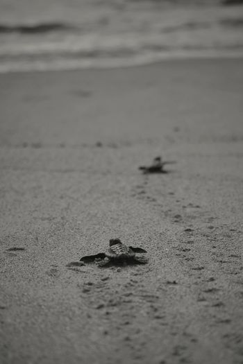 Beach Seaside Turtle Black & White Home Simple Things Animal Photography Animals In The Wild Famliy Photooftheday