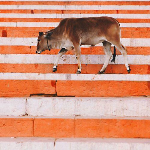 Varanasi stripes. EyeEm Best Shots - Nature EyeEm Nature Lover India Popular Photos EyeEm Best Shots