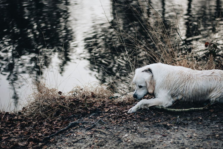 High angle view of dog sitting by lake