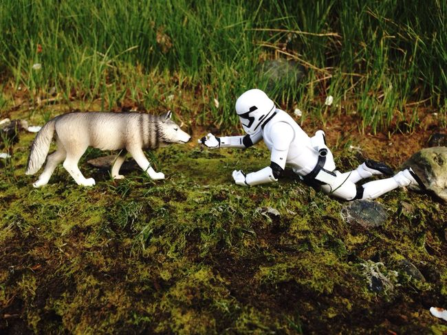 C'mere puppy, you is goodest boy *pat pat* Outdoortoyphotography Outdoor Photography Toys Toyography Epictoyart Toycommunity Toycrewbuddies Toy Photography Toyphotography Toygroup_alliance Action Figures Toyslagram Wolf Lonewolf StarWars Collection Starwarsblackseries Starwars Stormtrooper