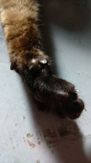 One Animal Pets Dog Domestic Animals Mammal Animal Themes Indoors