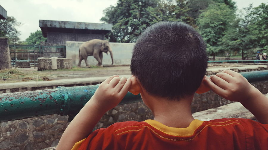 Rear view of boy holding ears at railing against elephant in zoo