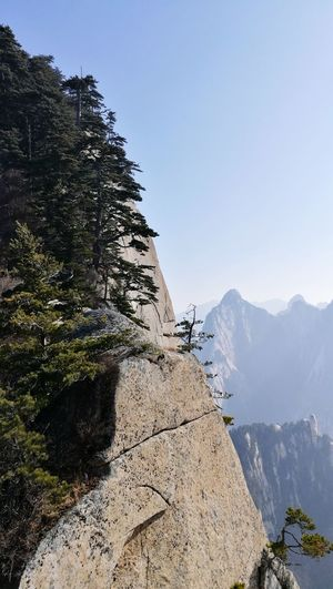 华山峭壁 Cliff Steep Steep Cliff Pine Pine On Cliff Tree On Cliff Mountain Mountain Range Nature Day Outdoors Vacations Beauty In Nature Landscape Scenics