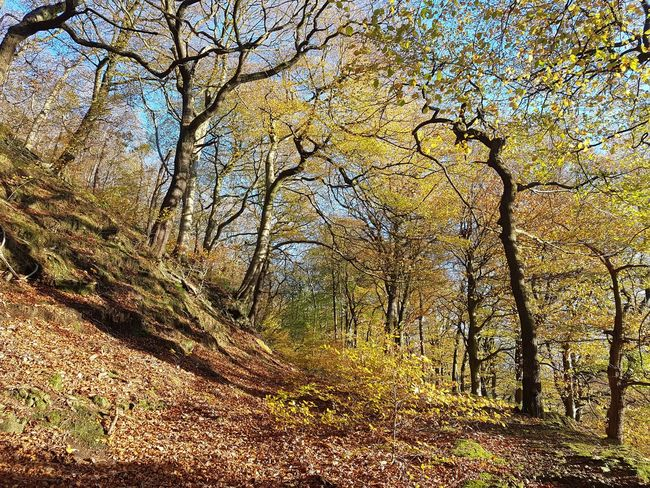 Full Frame Day Backgrounds Outdoors No People Sunlight Pattern Textured  Nature Close-up Beauty In Nature Tree Sky Autumn Eaves Wood Mytholm Calderdale WoodLand Forest Beauty In Nature No Edit/no Filter