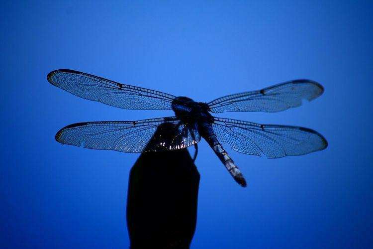 North Carolina Nature Ncnature Dragonfly Blue Lake View