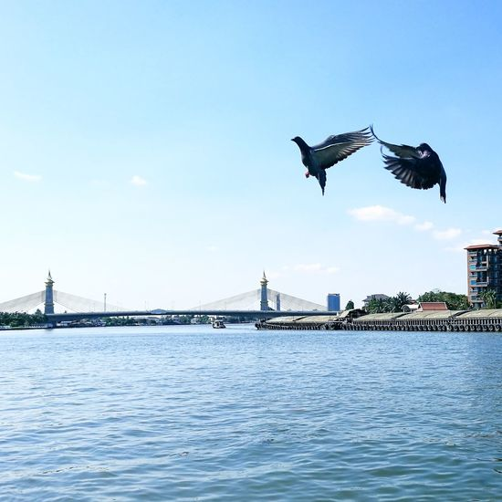 Bird Fly Water Thailand Asian  River Bird City Cityscape Water Urban Skyline Flying Spread Wings Bridge - Man Made Structure Seagull Blue