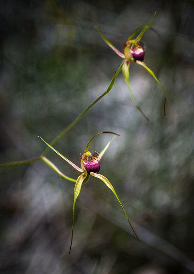 Beauty In Nature Branch Close-up Day Flower Focus On Foreground Food Freshness Fruit Landscape Leaf Nature No People Orchids Outdoors Plant Spider Orchid Vertical