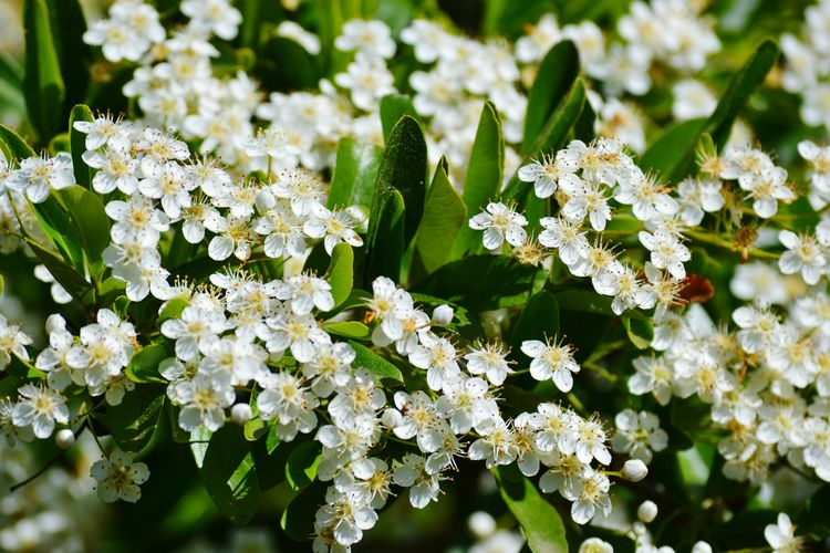 White White Flowers Flower Leaf Flower Head Nature Reserve Close-up Plant Animal Themes Plant Life Flowering Plant In Bloom Blooming
