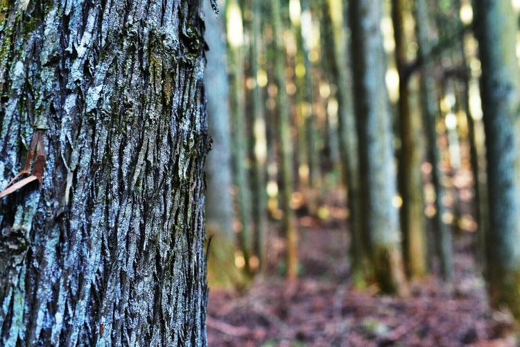 Hugging A Tree Trees Winter Trees Winter EyeEm Best Shots - Nature Tree_collection  Forest