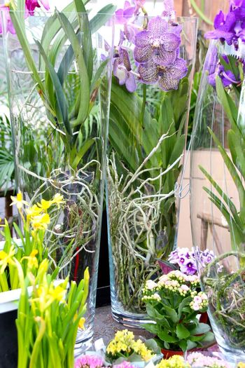 Flower Festival Madeira Island April 201 Air Blooming Building Exterior Built Structure Day Decoration Flower Flower Collection Flower Pot Fragility Freshness Green Color Growth In Bloom Inspiration Leaf Nature No People Orchids Outdoors Petal Plant Potted Plant Purple Vanda