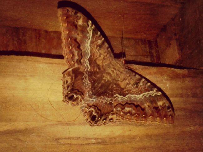 Beatiful Life Ecuador♥ Butterfly