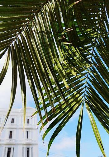 Day Palm Tree