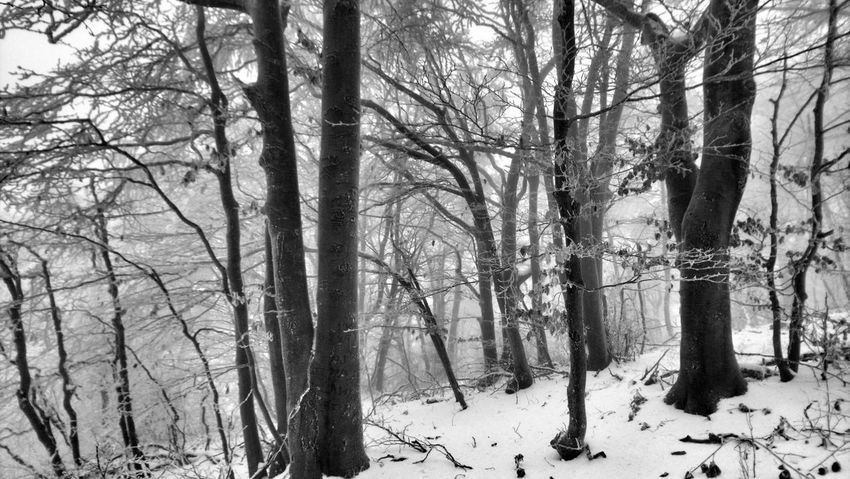 Garvan Winter Wintertime Winter Wonderland Winter Trees Winter_collection Winter Beauty  Forest Forest Photography Forest In Winter Forest Magic Winter Magic Snow Snow Magic Tree Bare Tree Nature Snow Cold Temperature Tree Trunk Winter Forest Tranquility Branch Beauty In Nature WoodLand Outdoors Day Scenics No People Growth
