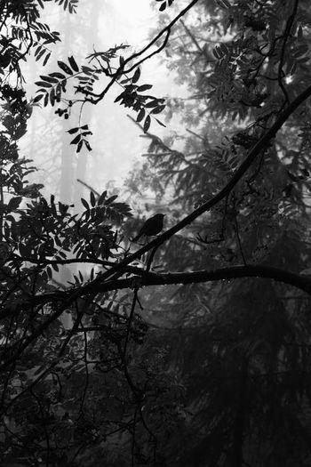 Bird Birds Birdontree Tree Trees Wood Phogel Tatry Tatry Vole Inlove Black Blackandwhite Black And White Black & White Mood Moodblack