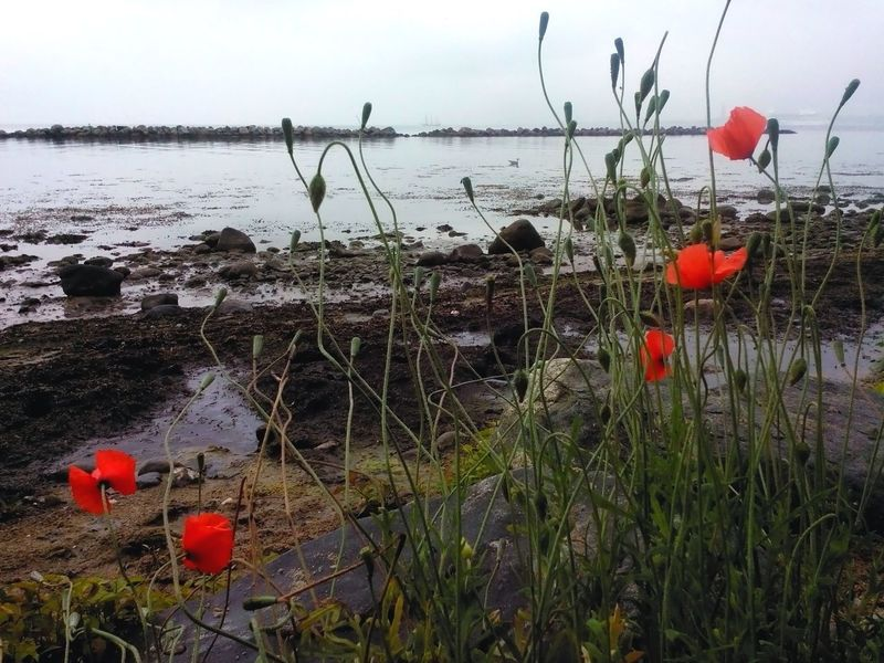 Claudyday Beautiful Beach Beach Photography Flower Poppies  Nature_collection Naturelovers Baltic Sea Landscape_Collection Tranquil Scene Cloudy Ocean View Cloudyday