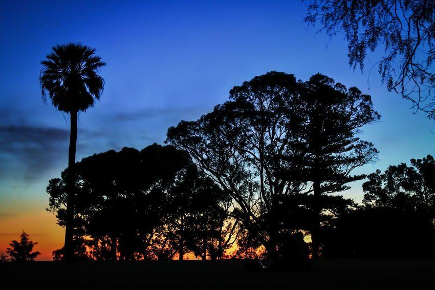 Palm Tree Sunset Nature Sky Taking Photos Australia