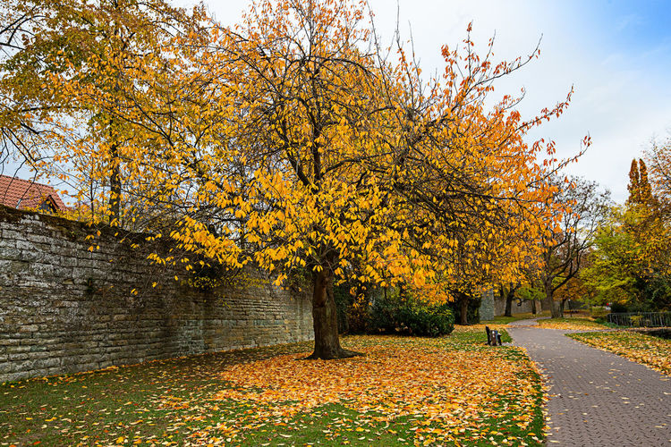 Autumn Tree Change Plant Beauty In Nature Plant Part Leaf Orange Color Nature Growth Day No People The Way Forward Footpath Tranquility Direction Road Scenics - Nature Outdoors Sky Autumn Collection Fall Soest, City Wall, Stadtmauer,