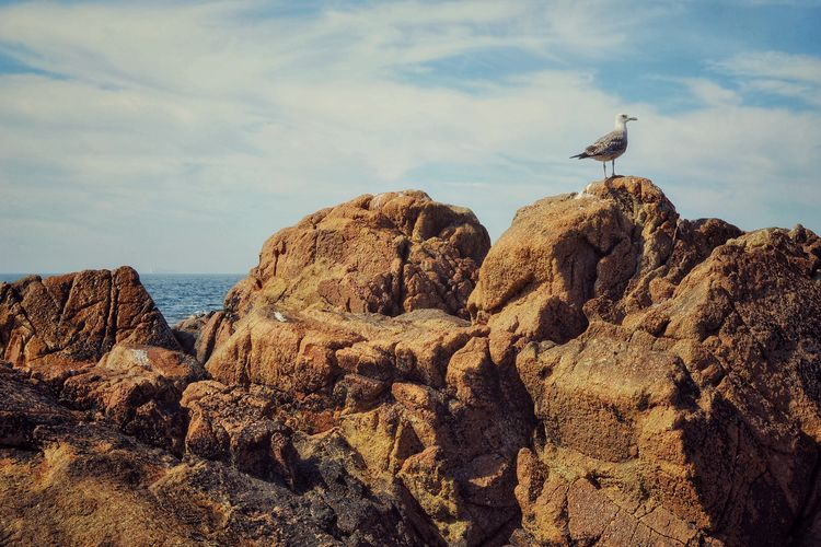 High angle view of seagull on rock against sky